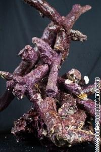 Real Reef Rock Branch Per Kg