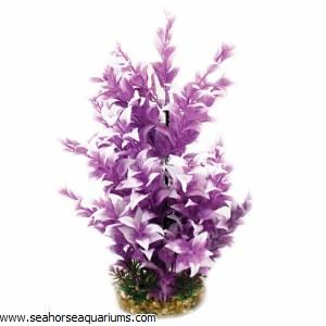 Aquaone Purple Ludwigia Lg