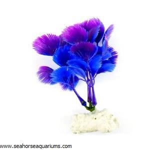 Boyu Purple Plant Plant