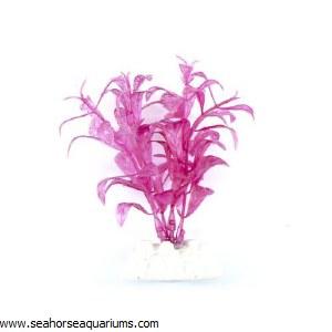 Boyu Pink Plant Plant