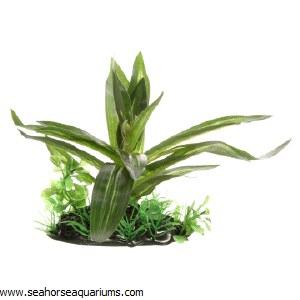 Giant Sagittaria 10cm Plant