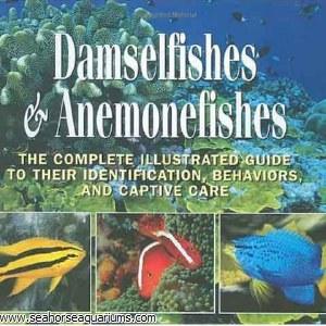 Damselfish & Anemone Fishes