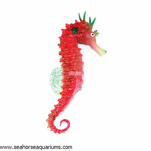 Floating Seahorse Mixed Colour