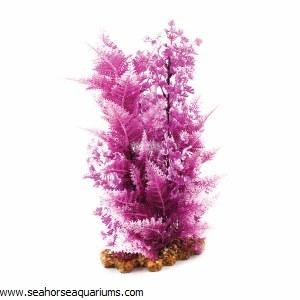 Pink Elatine Hygrophila XL
