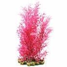 Aquaone Pink Ludwigia XL