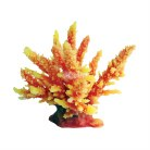 Orange Spiny Acropora 12cm