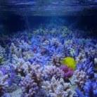 24W Fiji Purple bulb