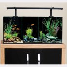 Betta Trio Aquarium 32 Litre