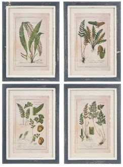 Fern Framed Wall Print