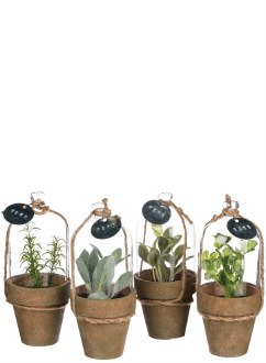 Herb in Cloche Potted Plant