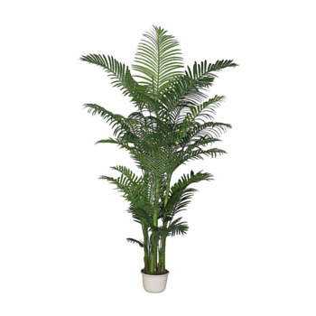 Areca Palm with Pot
