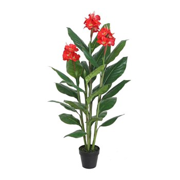 Canna Red with Pot