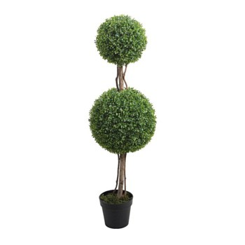 Boxwood with Pot