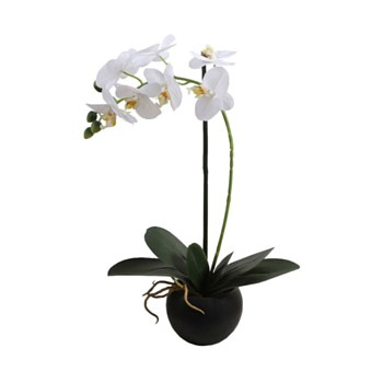 Orchid with Pot