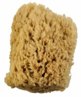 Royal Brush Wool Sponge, 5-6in.