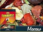 Higgind Sunburst Macaw 3#