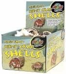 Natural Hermit Crab Shell Bulk