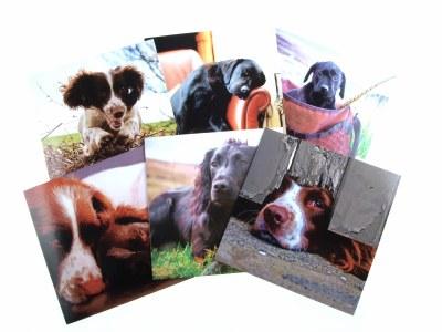 Greeting Card Dog Pack