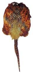 Bisley Pheasant Skin Pelt