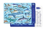 Placemat: 36 Sharks