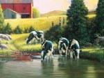 *Holsteins 500pc