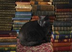 Library Cat 1000pc