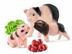 Miniature Pig Mother & Piglets