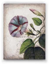 Sid Dickens T439 Morning Glory Memory Block