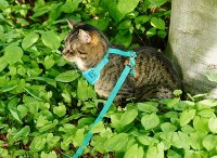 Adventure Kitty Harness, Teal, Large