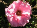 Rose Cl Bantry Bay