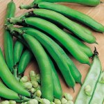Thompson and Morgan Broad Bean MedesBee Friendly Plants