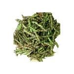 Fresh Green Tuver
