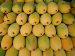 Kaybee Totapuri Mango