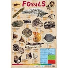 FOSSILS WALL CHART
