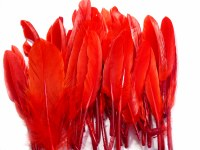 FEATHERS 11CM-14CM RED