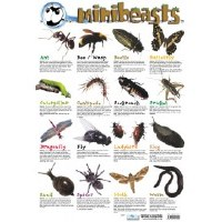 MINI BEASTS WALL CHART