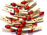 STATPAK CRAFT LADYBIRD PEG 25