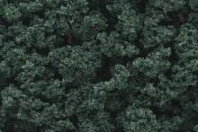 Bushes Dark Green - FC147