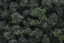 Bushes Forest Blend - FC149