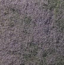 Foilage Flowering Purple - F177