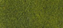 Grass Fibre Light Green 50gms - 3364