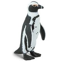 African Penguin - 204029