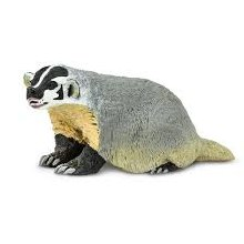 American Badger - 295429