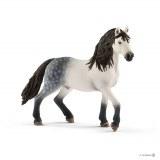 Andalusian Stallion - 13821