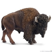 American Bison - 14714