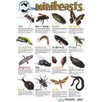 MINI BEASTS WALL CHART