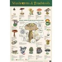 MUSHROOMS AND TOADSTOOLS WALL