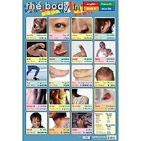 THE BODY WALL CHART