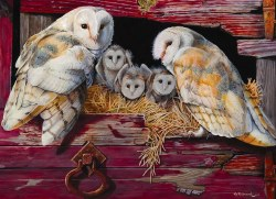 Barn Owls 1000pc
