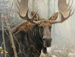 Bull Moose 500pc